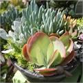 Houseplants - Customer Service