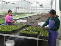 F & B Farms and Nursery Leigh Geschwill